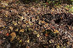 Herbstwanderung vom KKV_17