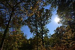 Herbstwanderung vom KKV_7