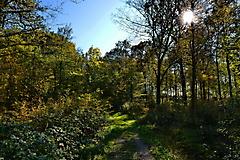 Herbstwanderung vom KKV_9
